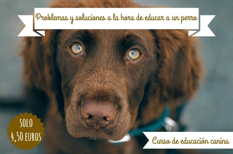 problemas y soluciones para educar a un perro